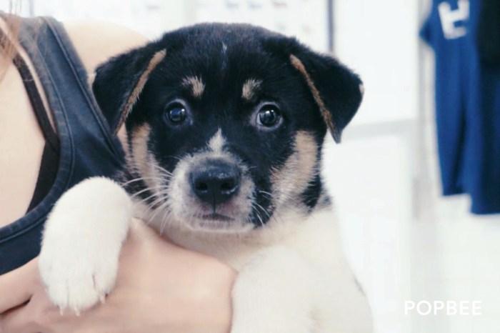 給毛孩一個溫暖的家:HKDR 的狗狗在等你!