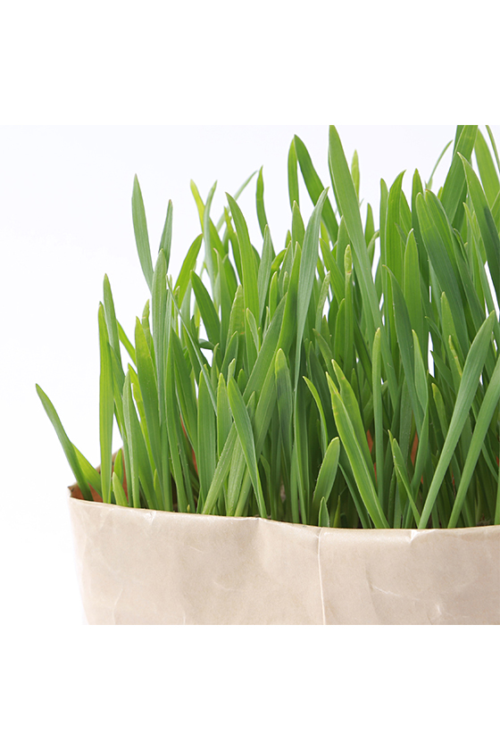 muji diy cat malt grass