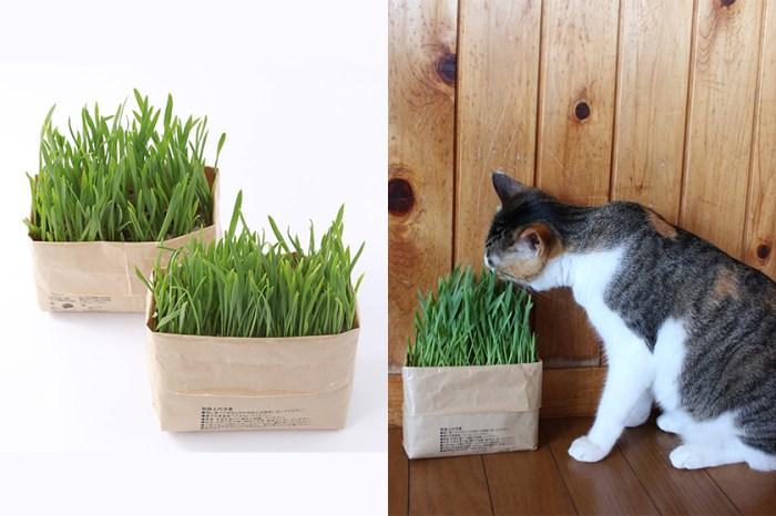 養貓也要有品味!Muji 推出貓草,簡約控貓奴必備!