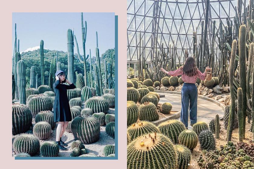 shenzhen-travel-instagram-spot-fairy-lake-botanical-garden