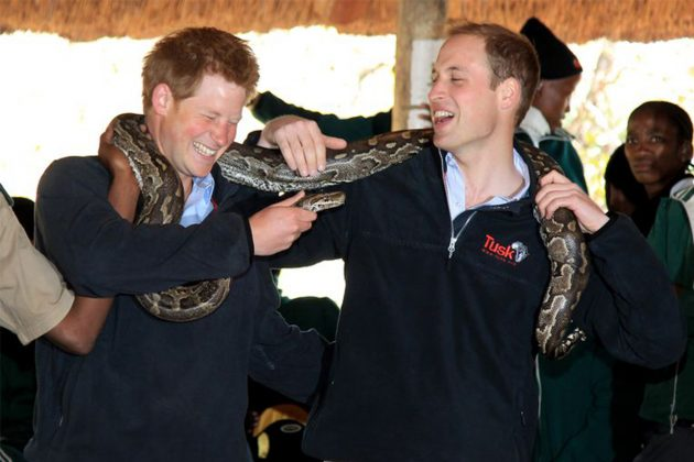 Prince William Prince Harry Africa