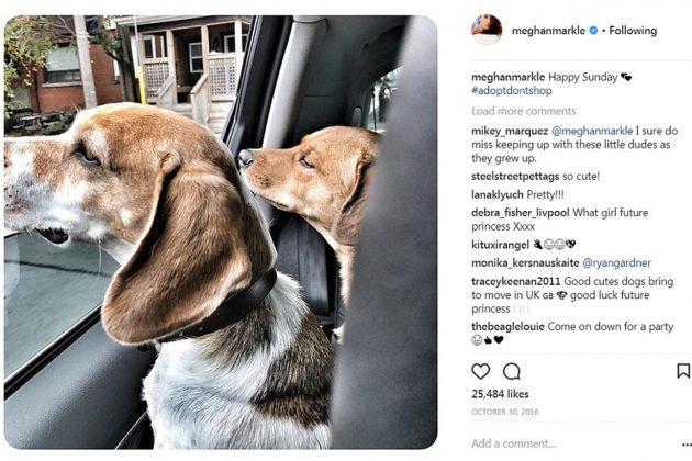 Meghan Markle Animal Right Instagram