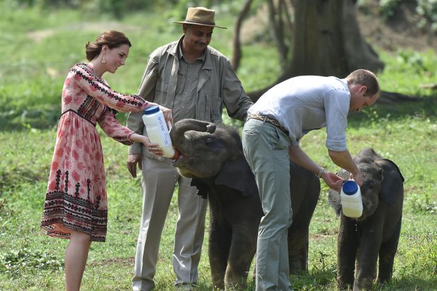 Prince William Princess Kate Africa