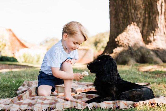 喬治王子對「牠們」產生興趣,還讓皇室一家人都陪他研究!