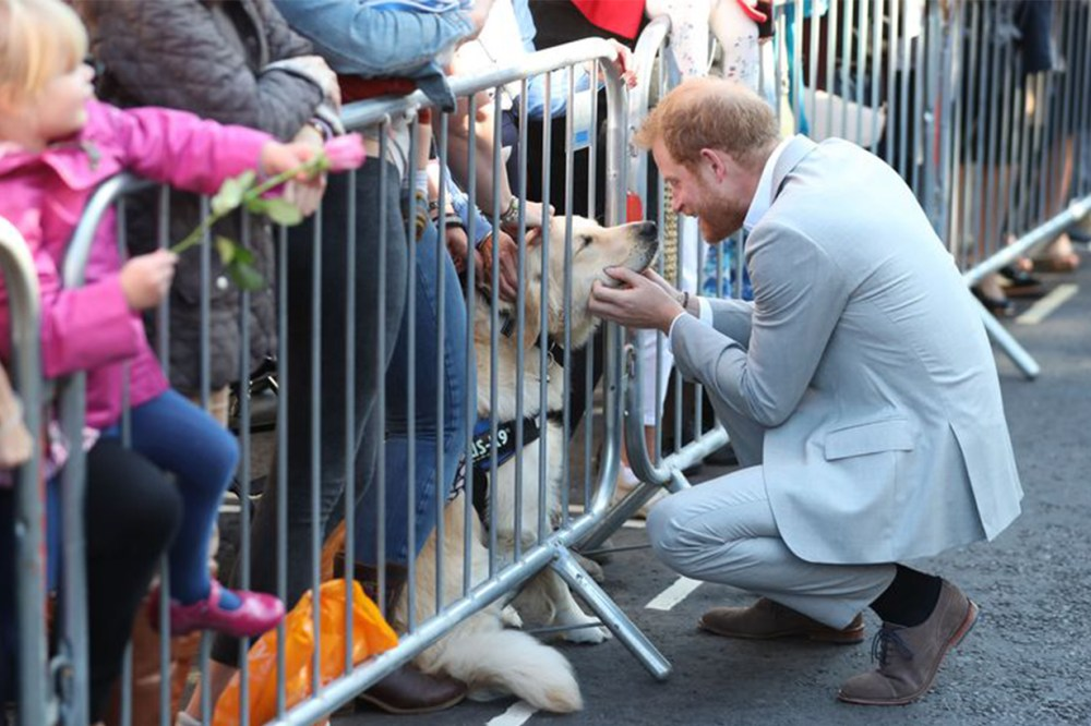Prince Harry palys with dog