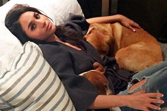 攪錯名字了!梅根王妃「否認」新領養的小狗名叫 Oz