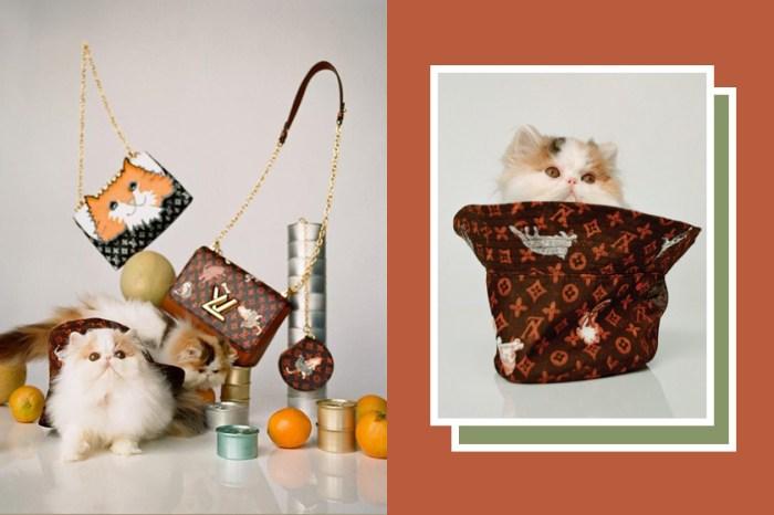 有貓出沒!Louis Vuitton  X Grace Coddington 超萌喵星人系列,身為貓奴實在忍不住!