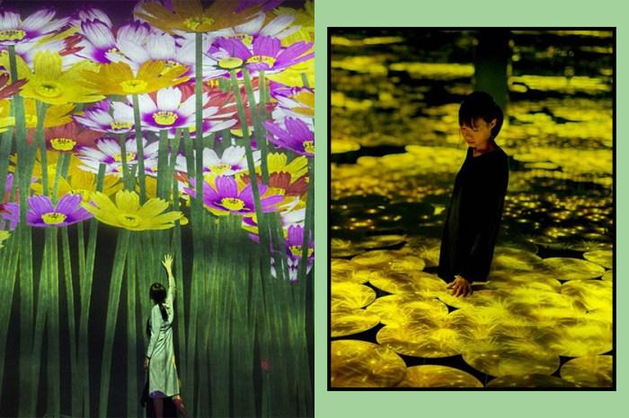 馬上訂機票!TeamLab 東京藝術館推聖誕限定「冬季花卉」主題作品!
