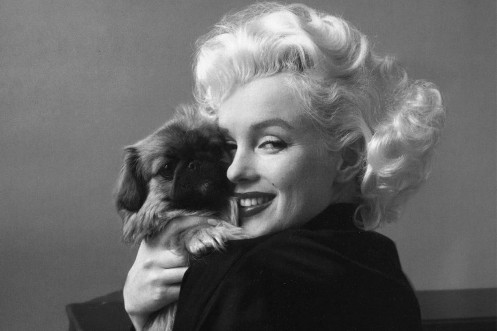 Facts About Marilyn Monroe Dog