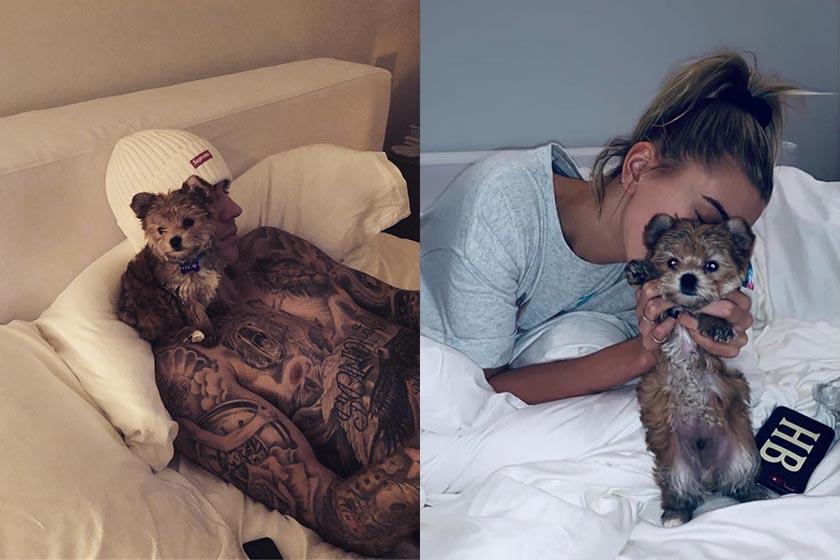 Justin Bieber Hailey Baldwin new puppy Oscar Bieber