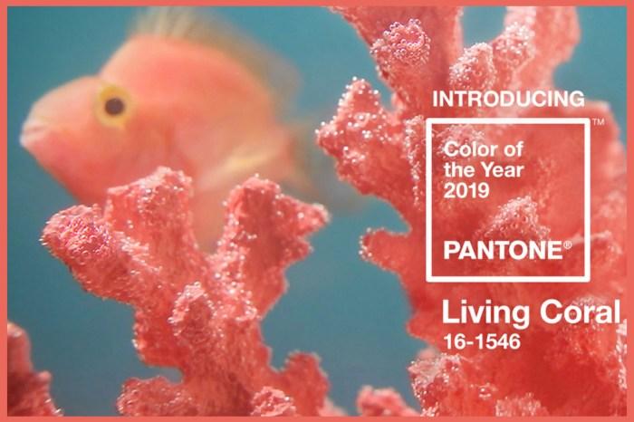 Pantone 公佈 2019 年代表色:是溫暖敦厚的「活珊瑚橘色」!