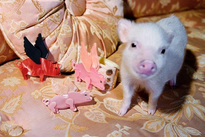 近賞最時尚的小豬系列:新年就穿 Gucci 去拜年吧!