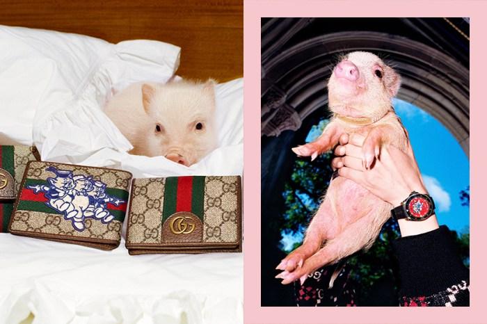 Gucci 推出小豬嘜別注產品,你最想要的新年系列一定是這個!