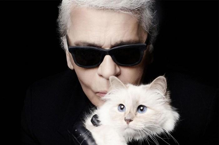Karl Lagerfeld 的唯一摯愛、遺產繼承者——愛貓 Choupette 的未來命運會怎樣?