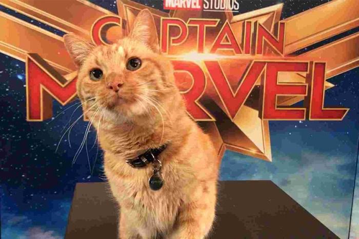 《Captain Marvel》宣傳片只以貓作主角,更長達 1 小時!網民:比英雄們更強!