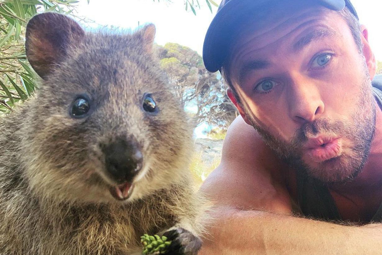 Chris Hemswort Quokkas selfie