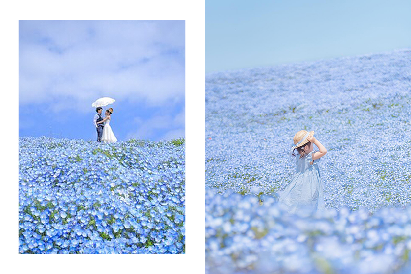 Ibaraki Japan Travel Blue Flower Park Instagram Tag