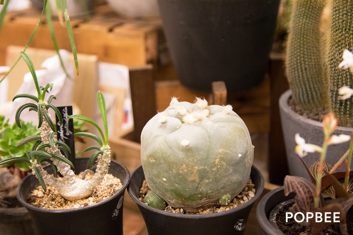 Green Egg Store 多肉植物 hong kong mong kok botanical-store