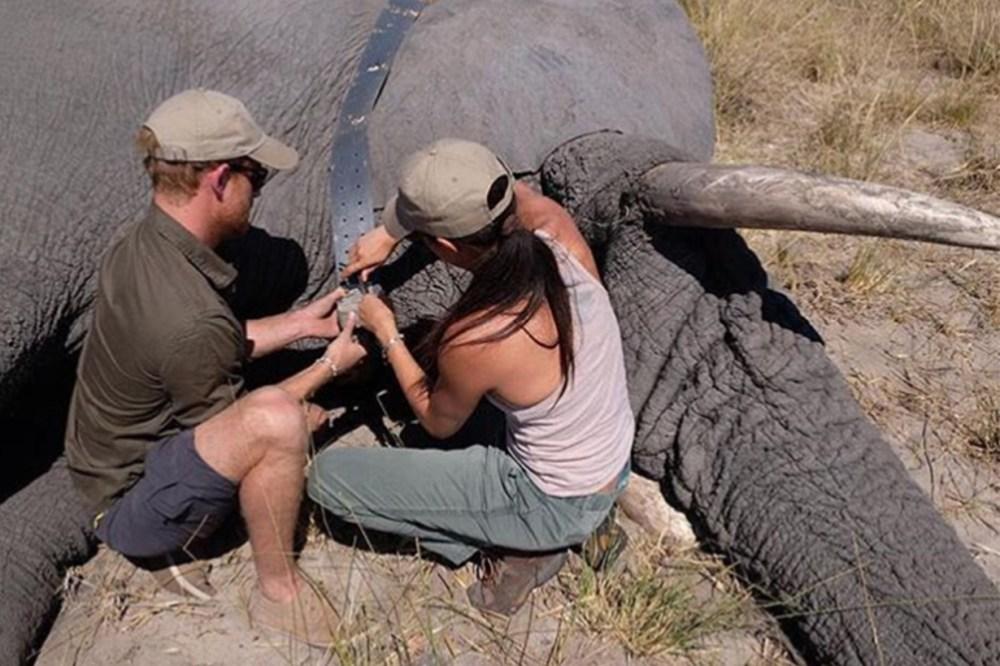 Prince Harry Meghan Markle elephant tracking