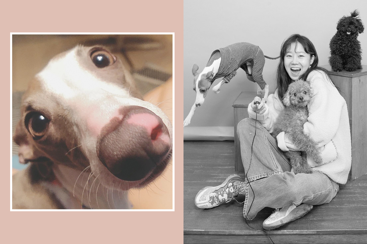 Gong Hyo Jin pet dogs yozi mimi toto instagram
