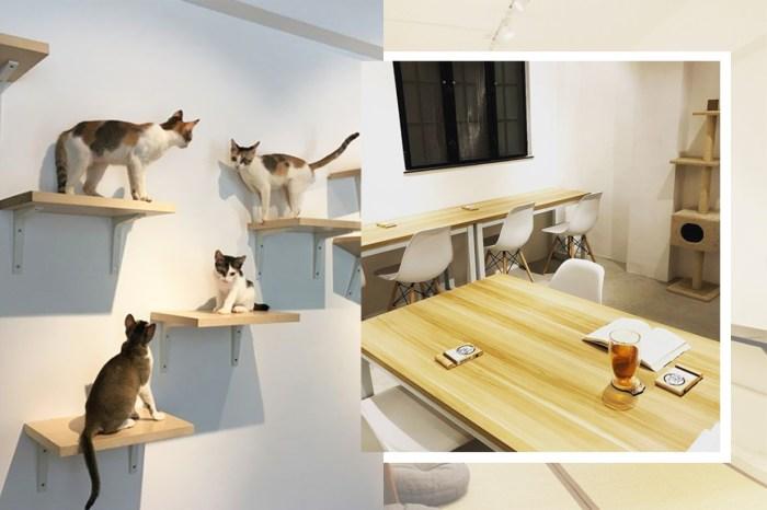 #POPBEE 動物專題:一訪人貓共享工作室「浪浪抱抱」,貓的故事不一定悲情