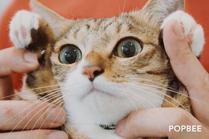 #POPBEE 動物專題:琉球皇 Oki 的沖繩移民記,與流浪動物遇見也是種安排