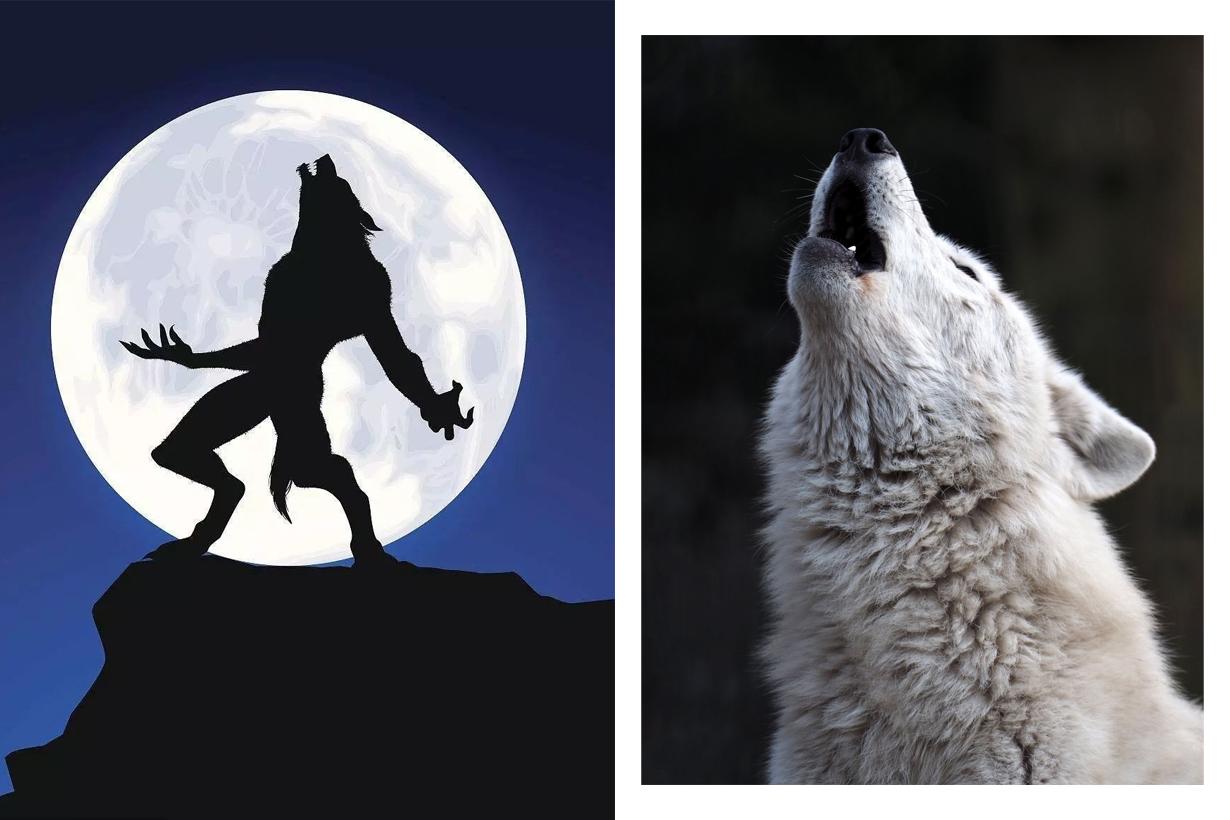 Werewolf Mafia killer party game Dmitry Davidoff  game background history
