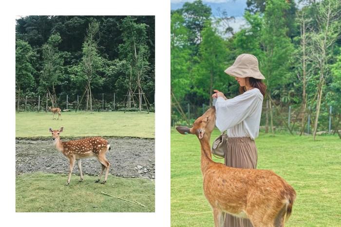 台灣也有小奈良!療癒梅花鹿就在身邊的「斑比山丘」成了 IG 打卡熱點!