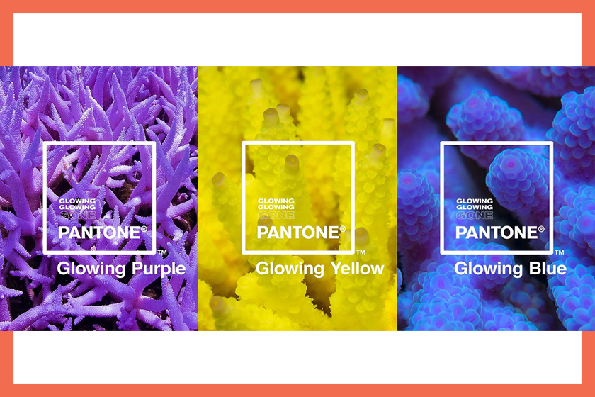 Pantone Unveils New Color Tones Based on Coral React to Climate Change Glowing Glowing Gone
