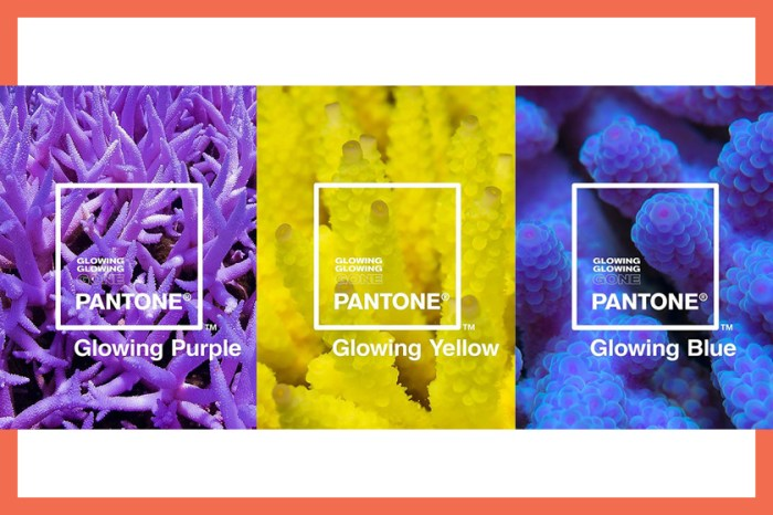 Pantone 推出 3 種全新珊瑚色,絕美顏色背後藏著悲慘真相!