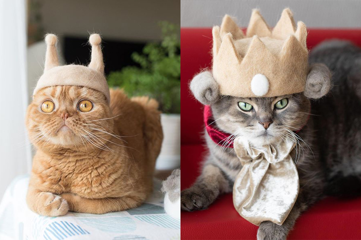 ryo yamazaki cats in hats crafted using their own fur