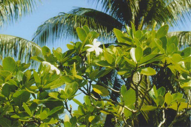 Diptyque 34 Essences Insensees fleurdetiare