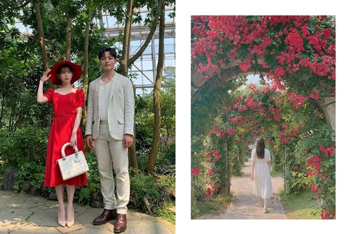 酒店大門、玫瑰花園、沙灘場景原來在這:收集《德魯納酒店》中的熱門打卡點!