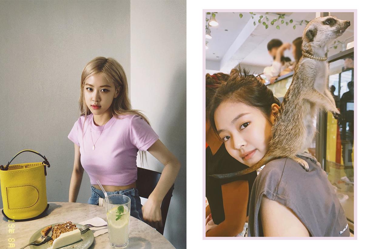BLACKPINK Jennie Rose Lisa Jisoo Meerkat Cafe Timon Lion King korea seoul hongdae travel spots k pop korean idols celebrities singers girl bands