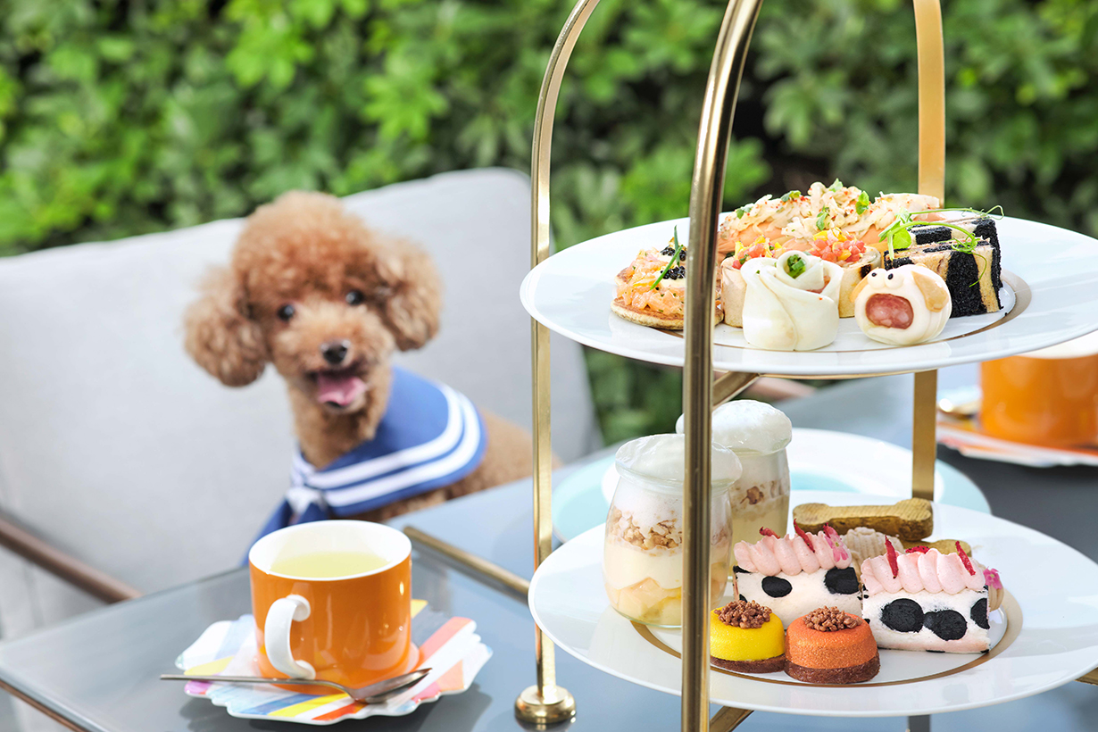 murray dog friendly afternoon tea
