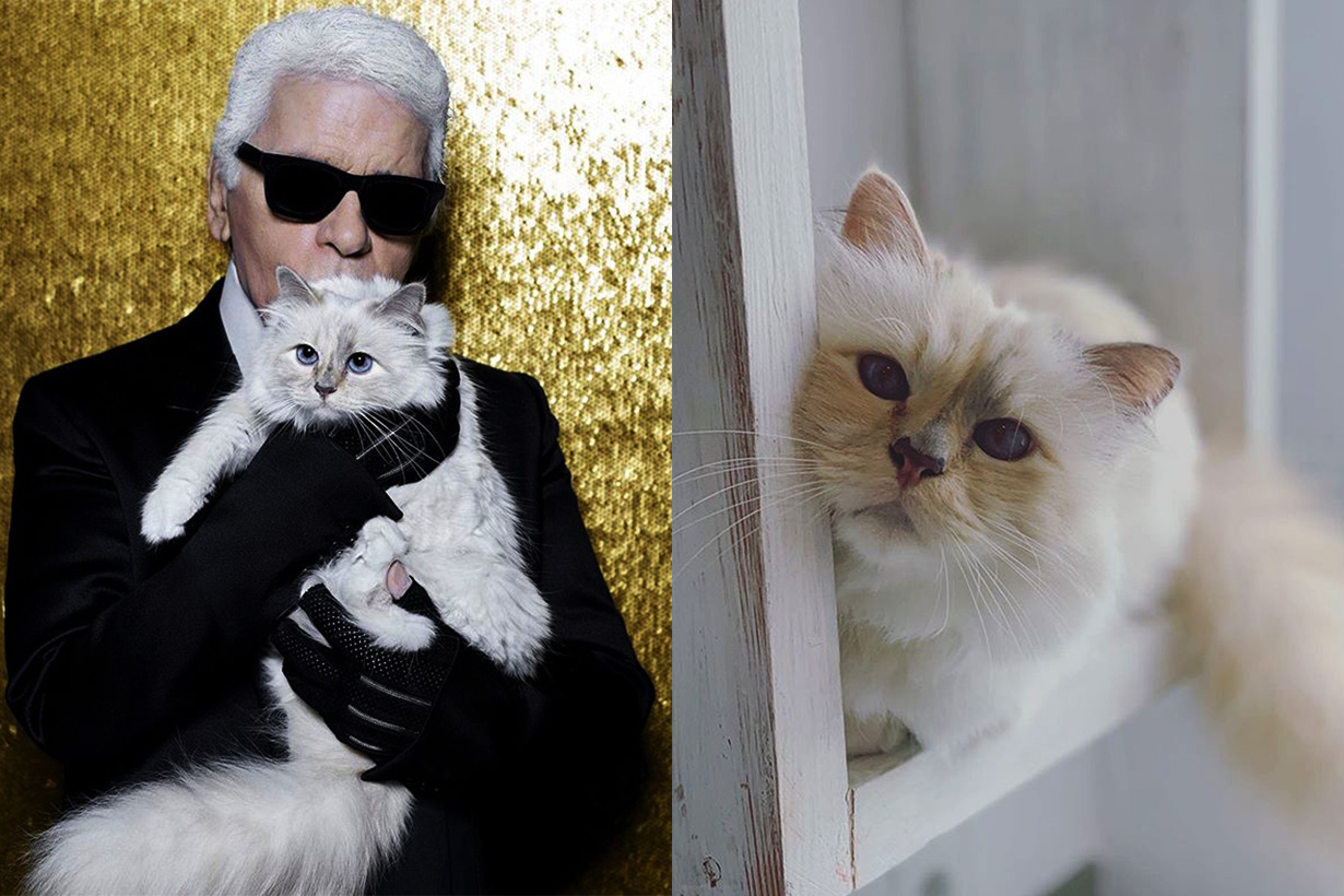 Where is Choupette? Karl Lagerfeld cat instagram
