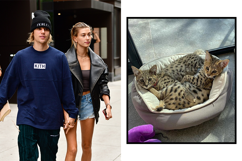 Justin Bieber defends buying designer kittens