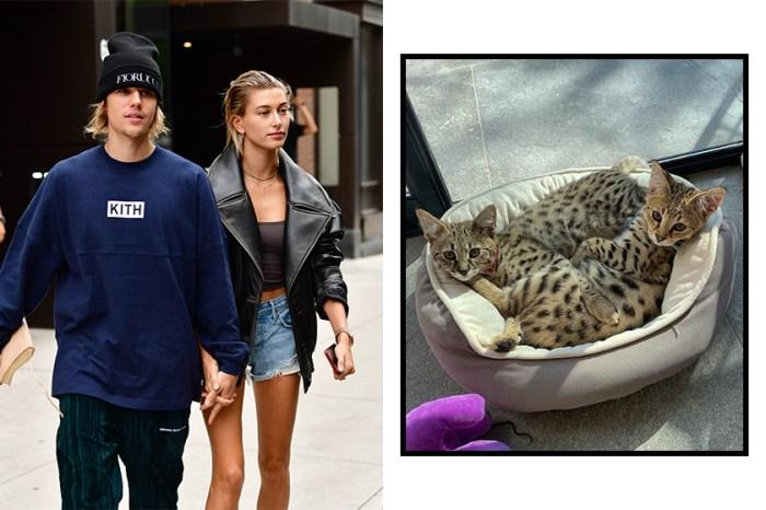 全因這兩隻小貓,Justin Bieber 跟 Hailey 被炮轟「助長歪風」!