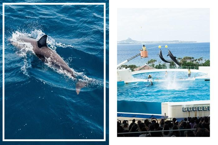 拒當幫兇!全球最大旅遊平台 TripAdvisor 霸氣宣布停售圈養鯨豚的遊樂設施門票!