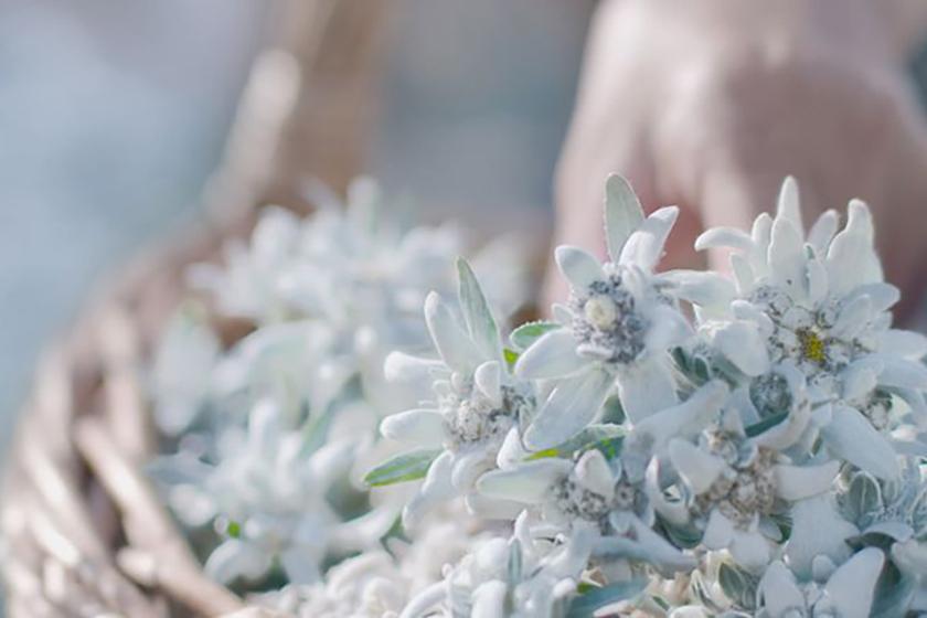 edelweiss-dior-clarins-helena-rubinstein-skincare