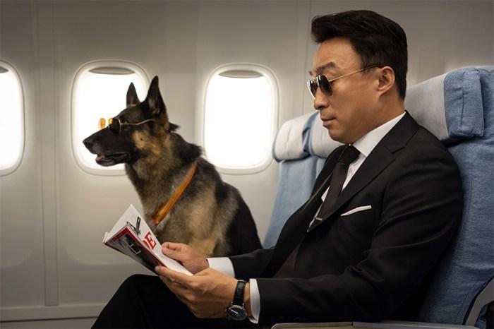 《好狗特攻隊》影評:一部歡樂喜劇,帶出的卻是人類對動物視若無睹的殘酷現狀!