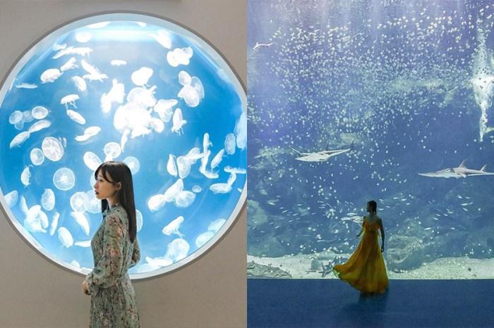 被稱為最美水族館:走入療癒的海底世界,來自日本的 Xpark 在台灣開幕了!