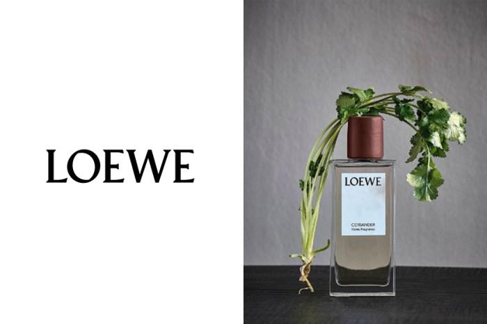 Loewe 首個家居香氛系列,最受歡迎的竟然是芫荽味!