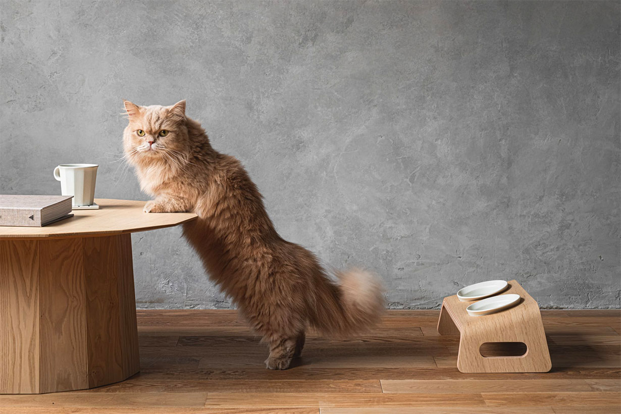 KARIMOKU cat table lifestyle pets