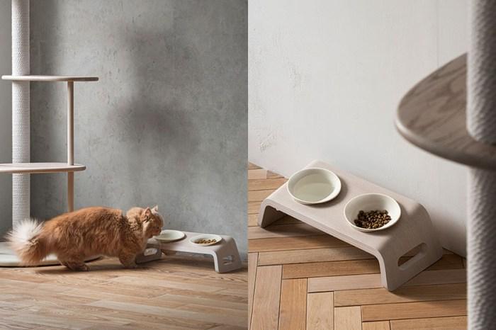 引起熱烈迴響:日本新推出「貓餐桌」,降低貓咪進食時的壓迫!