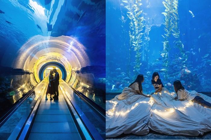 與夢幻海底世界共眠:美的讓人停不下相機快門的「夜宿海生館」體驗!
