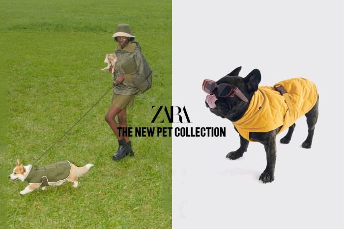 毛小孩的時髦衣櫃:ZARA 全新 Pet Collection,比你想得還實穿!