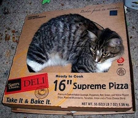pizzaneko-2.jpg