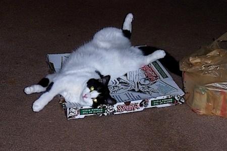 pizzaneko-5.jpg