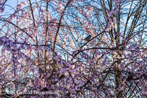 aprilflowers-2